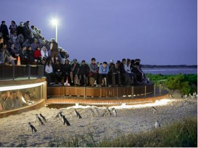 Penguins Plus Viewing Platform