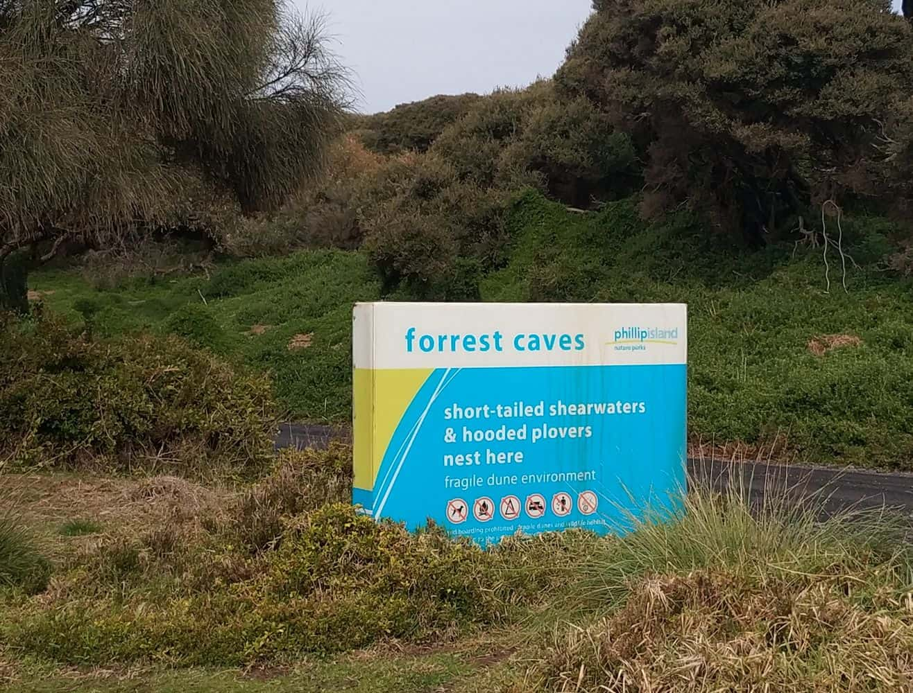 forrest caves 02