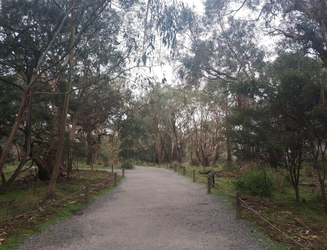 Koala Conservation Centre 18