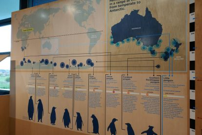 penguin parade 13