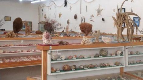 Bunurong Environment Centre